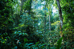 The Jungle in Palenque (Black-Brick) Tags: jungle forest ancient maya palenque mexico beautiful mysterious green hiking trees