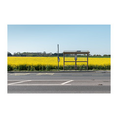 Bus Stop (John Pettigrew) Tags: lines tamron d750 nikon rural topographics banal markings shelters countryside documentary yellow imanoot angles stop norfolk spaces bus deserted road sign posts johnpettigrew mundane