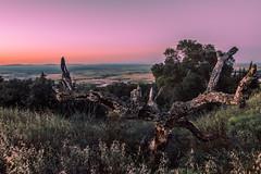 old wood (jcc90) Tags: nikon d3200 naturedead colours beginner caceres extremadura rare sol cielo arbol puestadesol pink rosa sunset