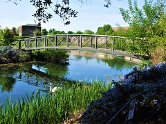 Bridge Over The Lake In Syon Park Gardens, Brentford - London. (Jim Linwood) Tags: syonpark brentford london england
