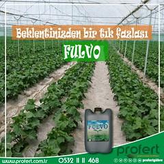 profert salatlk (Profert Gübre) Tags: salatalık fertilizer sebze sebzecilik seracılık sera sulama seed soil tarım toprak tarlabitkileri tarla tabangübre