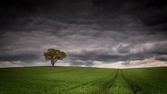 Dark green (paullangton) Tags: sky clouds rain hertfordshire field tree storm green dark countryside landscape nature canon leefilters light