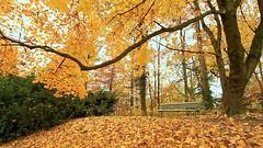 Tempo di separarsi (eshao5721) Tags: alberi lachiesadidioonnipotente lodeadio signoregesù salvezzadidio laverità testimonianze dioonnipotente lavocedidio lafedeindio