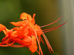 IMG_2354 (kennethkonica) Tags: flower plant nature canonpowershot canon indiana indianapolis indy color orange hoosier random usa america midwest vivid macro