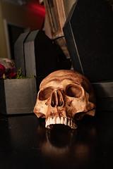 Endless Night Salem Vampfangs Vampire Salon Hawhtorne Hotel 2019 Photos Creative Collective-6966 (creativecollectivema) Tags: salemmass salem vampires endless night vampfangs vampiresalon fathersebastian