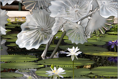 """Ethereal White Persian Pond (Mabacam) Tags: 2019 london kew """"kew gardens"""" """"reflections nature"""" exhibition chihuly """"dale chihuly"""" installation """"art installation"""" """"architectural glass steel etherealwhitepersianpond creative colour"""