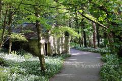 Tintern Wood (Ken Meegan) Tags: tinternwood tinternabbey saltmills cowexford ireland 552019 wood tinterntrails