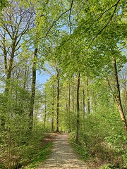 Jette-Laarbeekbos-forest3 (foto_morgana) Tags: aurorahdr2019 belgium forest on1photoraw2019