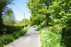 Kent country Lanes (Adam Swaine) Tags: counties countryside countrylanes country ukcounties uk rural ruralkent broads broadbritain broadsuk hedges hedgerows trees britain british kent kentweald aonb northdownskent canon green england english