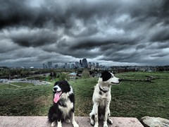 Where is the view? (Adventures with Trin) Tags: calgary skyline dramatic clouds dog dogs cute bordercollie australianshepherdcross