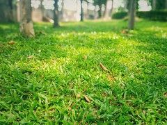 Leaves and lawns (naatoy) Tags: lawn nature park leaf grass landscape green tree season garden outdoor background beautiful field spring day sunny environment summer light natural meadow plant sky color sunlight forest autumn sunset bright yellow foliage fall land flora sunrise sun november fresh nobody colorful october gardening leaves cloud yard morning red countryside floral