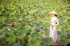 Vietnamese female on a wooden boat collecting lotus flowers. Asian women sitting on wooden boats to collect lotus. Beautiful girl wearing traditional Vietnamese dress hand holding pink flowers. (pomp_jaideaw) Tags: lotus vietnamese woman vietnam ao dai beautiful traditional flower boat asia wooden girl travel nature white female asian portrait lake young people dress hat green outdoor happiness lady culture women person smile costume park tourism pink beauty happy pond water leaf wearing summer fashion face holding tradition scene pool