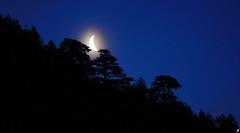 Drifted moonrise (Xenofon Levadiotis) Tags: moon moonlight halo moonhalo forest sunup sunrise trees pine pindos pindus epirus ipiros konitsa pades armata still silent early night treescape αυγή νωρίσ πρωί δάσοσ άρματα πάδεσ ήπειροσ κόνιτσα ελλάδα σελήνη φεγγάρι ομίχλη πρωινό nature φύση