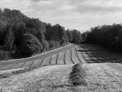morningwalk (Rosmarie Voegtli) Tags: landscape fields dornach morningwalk pattern nature trees blackandwhite blackwhite