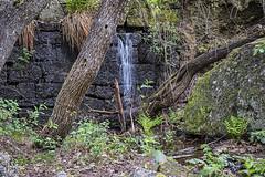 Agua incontenida (lebeauserge.es) Tags: rascafría madrid españa naturaleza árbol río agua