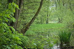 16.05 (Kosmi88) Tags: forest nature natura las drzewa dziecko child human nikon głowno rzeka river water wiosna maj may 2019 d5300 poland