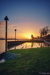 Sunset Ducks (Stathis Iordanidis) Tags: sunset sundown ducks maas river riverside kasteel netherlands romanticsunset amazinglandscape serenity silence traveling tranquility