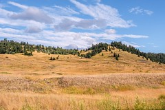 Blue Sky Country - Hat Creek Road (MIKOFOX ⌘) Tags: canada trees britishcolumbia grassland xt2 learnfromexif july landscape provia hills fujifilmxt2 summer showyourexif mikofox xf18135mmf3556rlmoiswr
