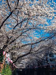 東京記事|Tokyo (里卡豆) Tags: 東京都 日本 jp olympusem1markii em1ii japan 東京 tokyo panasonicleicadg12mmf14 panasonic leica dg 12mm f14