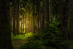 One more step (Petr Sýkora) Tags: les nature trees light outside wander