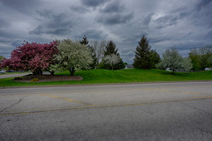 Colorful Trees (kendoman26) Tags: hdr nikhdrefexpro2 trees spring sonyalpha sonya6000 sel1628 sonyvclecu1 morrisillinois