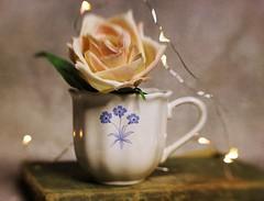 Still Life (DayBreak.Images) Tags: tabletop stilllife teacup rose antique vintage book mini lights ringlight canondslr lensbabysol45 photoscape texture
