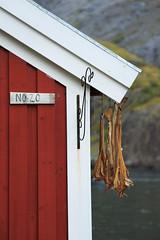 20180825-Canon EOS 6D-4676 (Bartek Rozanski) Tags: nusfjord nordland norway fishery fishing house rorbu cabin red cod drying lofoten flakstadoya village fish flakstadøya norge noreg