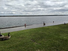 MVIMG_20190516_150852 (clefq) Tags: smpoole google pixel 2 htc mobile cell phone water river spring flood st lawrence brockville block house canada geese