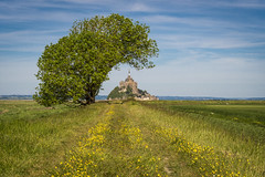 Mont Saint Michel and the buttercups (Alexander JE Bradley) Tags: magical 70200mmf28 afsvrzoomnikkor70200mmf28gifed nikon70200mmf28fl d500 nikon nikkor europe france normandy lowernormandy bassenormandie manche montsaintmichel fortifications island monumenthistorique mtsaintmichel saintmichaelsmount environment architecture frenchgothic bastions buildings building religious church monastery abbey monasticfraternitiesofjerusalem residential spire citywalls fortificationtowers history landscape hinterland lookout viewpoint scenic seascape nature noperson hill grass alexanderjebradley photograph photography travel tourism travelphotography wwwalexanderjebradleycom wwwaperturetourscom aperturetours normandyloirevalleyworkshop unesco worldheritage heritage montsaintmichelanditsbay flowers flower floral flora buttercups naturallight day bright