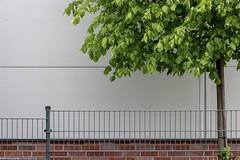 spring.fence (fhenkemeyer) Tags: hff nrw oberhausen minimalistic tree boring fence