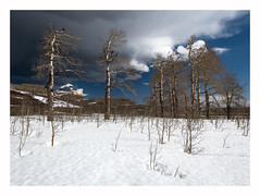 Approaching Storm (www.halkaphoto.com) Tags: usa americansouthwest utah dixienationalforest grandstaircaseescalantenationalmonument stateroute12 highway12 trees aspen grove storm clouds snow bouldermountain