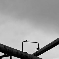 Industrial minimalism - Chorzów 2016 (Tu i tam fotografia) Tags: blackandwhite noiretblanc enblancoynegro inbiancoenero bw monochrome czerń biel czerńibiel noir czarnobiałe blancoynegro biancoenero kwadrat square quadrat minimal minimalizm bird ptak outdoor rury tubing linie lines polska poland zawór valve