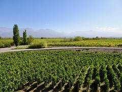 Valle de Uco Wineries - 10 (Bruno Rijsman) Tags: bruno tecla backpacking argentina valledeuco wine wineries winery mendoza