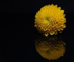 365 - Image 137 - Reflection... (Gary Neville) Tags: 365 365images 6th365 photoaday 2019 sony sonycybershotrx100vi rx100vi vi garyneville raynox