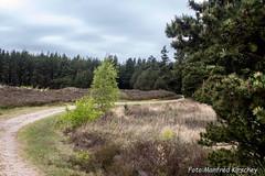 Heide03 (manfredkirschey) Tags: römö rømø insel dänemark nordsee nordseeinsel heide heidelandschaft