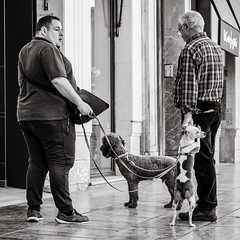 walking the dog (Gerard Koopen) Tags: malaga spain espana straat street straatfotografie streetphotography candid urban streetlife dailylife walkingthedog dog people man men streettalk blackandwhiteonly blackandwhite monochrome noir fujifilm fuji xpro2 56mm 2019 gerardkoopen gerardkoopenphotography littledoglaughednoiret