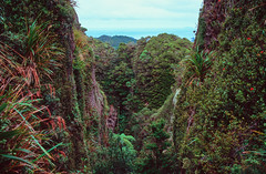Great Barrier Island valley, NZ (papasnap) Tags: zeissikon zeiss leica slidefilm e6 newzealand velvia 100 fujifilm