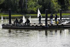 T37 Model Yacht Racing - London's Landing (SonjaPetersonPh♡tography) Tags: steveston stevestonchannel boats remotecontrolledmodelyachts nikond5300 nikon nikonafsdxnikkor18300mmf3556gedvr bc britishcolumbia canada richmond fraserriver t37fleets t37 racing sailing modelyachts waterway river modelboats racingskills