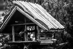 House in The Woods (Mirko Momirov Photography) Tags: birdhouse bird house nature outdoor bw blackwhite