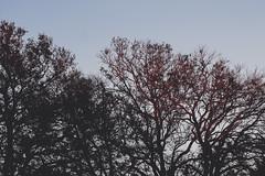 Trees like names (gabyuchi1) Tags: gloomy washington colors gloom desaturated colorful mood moody smooth landscape architecture travel photography photo nature trees sunset sun