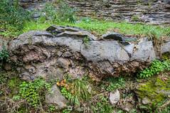 El fenómeno excepcional (SantiMB.Photos) Tags: 2blog 2tumblr 2ig santjoandelesfonts garrotxa girona invierno winter basalto basalt boscarró rocas rocks blister geo:lat=4221413800 geo:lon=250974500 geotagged santjoanlesfonts cataluna españa