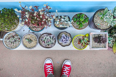 Red and Blue (Magic Pea) Tags: travel photo photography magicpea urban foot feet converse plants pots busan korea southkorea colour minimal simple