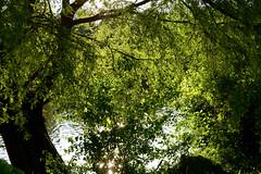 1PRO_2533 (Radu Pavel) Tags: radu radupavel pavel fotononstop cosmos ©radupavelallrightsreserved ©radupavelallerechtevorbehalten ©radupaveltodoslosderechosreservados ©radupavel版権所有 nature natur naturaleza 自然 colours farben colores 色 landscape landschaft paisaje 風景 summer sommer verano 夏 green grün verde 緑 tree baum árbol 木 outdoor alairelibre imfreien ルーマニア world welt mundo 世界 travel reisen viaje 旅行 românia romania rumänien rumania 羅馬尼亜 light licht luz 光 ecotourism explore tranquilo ruhig geruhsam serene peaceful lake see lago 湖 2019 dream traum sueño 夢