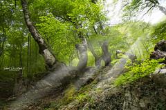 The magical forest (Samuele81) Tags: forest magic bosco landscape paesaggio nikon d7200 natura nature nikonnaturephotography natur sigma1770 sigma