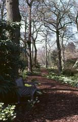 Harlow Carr Gardens,  Fuji Velvia 100 (vickyhindle) Tags: canoneos3 fujivelvia100 canonef50f14 35mmfilmphotography harlowcarrgardens