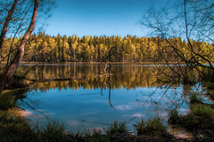 Bisajärvi (mabuli90) Tags: finland lake summer spring forest tree woods sky water waterscape nature branch blue grass pond