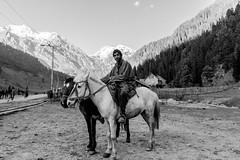 Valley of Shepherds (A. adnan) Tags: kashmir shepherd horse pahalgam aa ata adnan sonya9 travel photography jk india