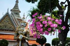 Bangkok, Thailand - Saturday, May 18, 1:12 PM. #Bangkok #Thailand #WatArun #Temple #OrdinationHall #Orchids #バンコク #タイ (kyonoshashin) Tags: タイ orchids bangkok thailand temple バンコク ordinationhall watarun