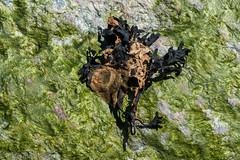 Details (aixcracker) Tags: emsalö emäsalo borgå porvoo nikond800 suomi finland macro makro närbild lähikuva nature 200mm micro may maj toukokuu spring vår kevät