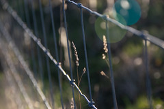 Opposite Sides of the Fence (Shastajak) Tags: fence bokeh wire grass echo earlymorninglight smileonsaturday fancyfence